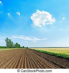 weiße wolke, in, blauer himmel, aus, schwarz, landwirtschaft feld