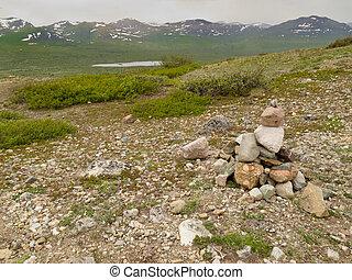 weißes, blühen, mountain-avens