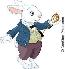 weißes kaninchen, hält, uhr