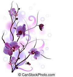 weißes, karte, zweig, orchidee