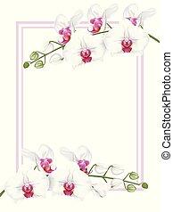 weißes, orchideen, mit, rahmen