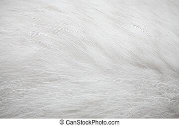 weißes, pelz, beschaffenheit, hintergrund