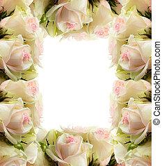 weißes, rosen, rahmen, umrandungen