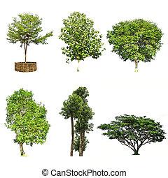 weißes, satz, hintergrund, freigestellt, bäume