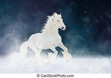 weißes, shire, pferd, hengst, läufe, galopp, aus, stern, himmelsgewölbe, hintergrund