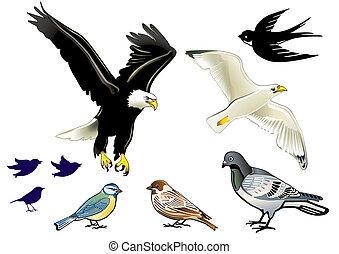 weißes, vögel