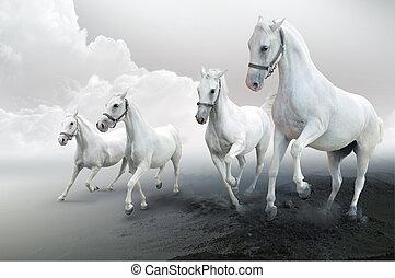 weißes, vier, pferden