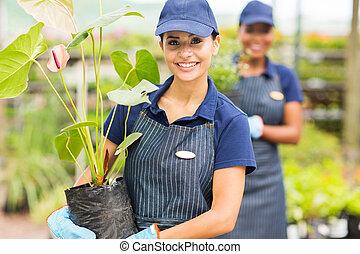 weibliche , baumschule, junger, arbeitende , gärtner