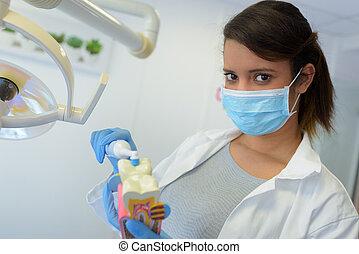 weibliche , junger, ausstellung, wie, zahnarzt, z�hne, bürste, richtig