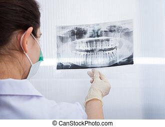 weibliche , zahnarzt, anschauen, zahnmedizinischer röntgenstrahl
