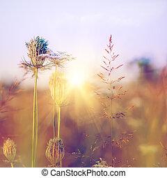 weide, beauty, achtergronden, milieu, wilde bloemen