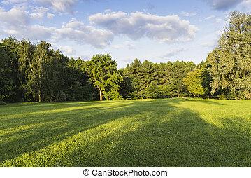 weide, in het park, op, een, zomer, day.