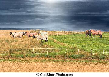 Weide mit Pferden - Sechs Pferde mit verschieden farbigen...