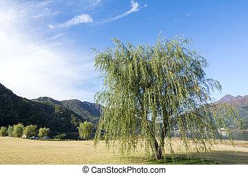 weidenbaum, von, seeufer