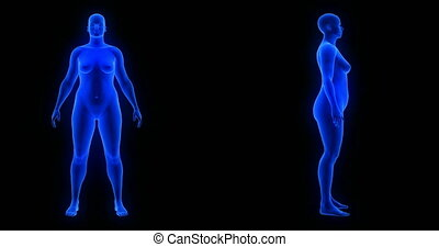Weight loss body transformation - front and side view, woman theme. Blue Human Anatomy Body 3D Scan render on black background