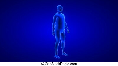 Weight loss body transformation - man theme. Blue Human Anatomy Body 3D Scan render on blue background