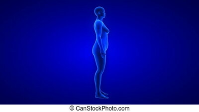Weight loss body transformation - side view, woman theme. Blue Human Anatomy Body 3D Scan render on blue background