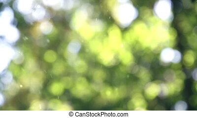 Weightless pollen - Random movement of pollen on a green...