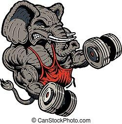 weightlifter, 象
