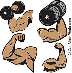 Weightlifter Arms - Clip art collection of muscular...
