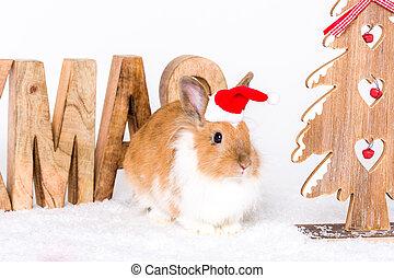 weihnachten, glücklich