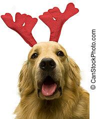 weihnachten, hund, rentier
