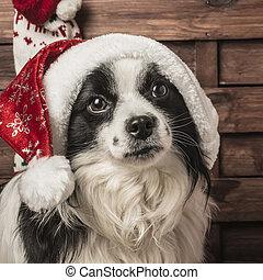 weihnachten, hund, santa