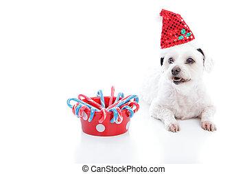 weihnachten, hund, und, schüssel