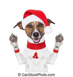 weihnachten, hund, verabschiedung, hallo