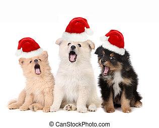 weihnachten, hundebabys, tragen, santa, hüte, und, singende