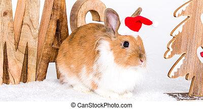 weihnachten, kaninchen