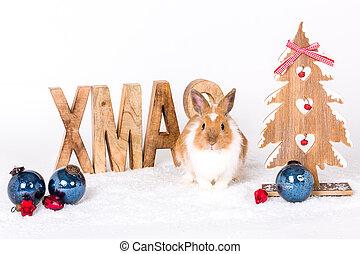 weihnachten, kanninchen