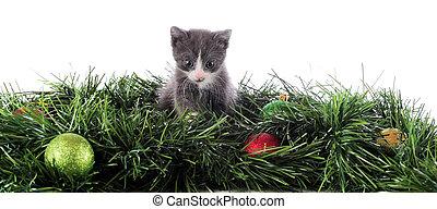 weihnachten, katzenkinder, umrandungen