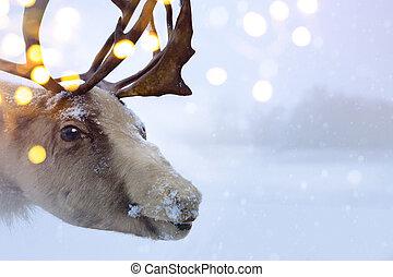 weihnachten, nördlich , hirsch