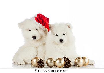 weihnachten, puppy., frohe weihnacht