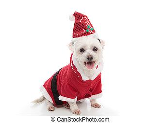 Weihnachten,  santa, hund