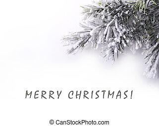 weihnachtsbaum, zweig, bedeckt, schnee