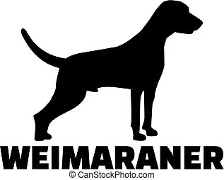 Weimaraner with breed name