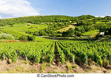 weinberg, bei, pouilly-fuisse, burgunder, frankreich