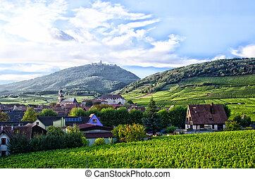 weinberg, landschaftsbild