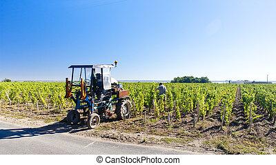 weinberg, mit, a, traktor, bordeaux, gebiet, frankreich