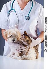weinig; niet zo(veel), arts, veeartsenijkundig, dog, katje, vergadering