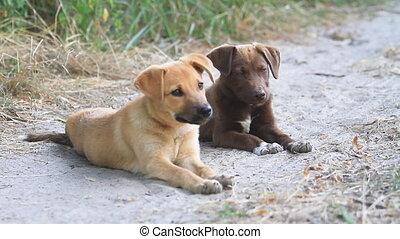 weinig; niet zo(veel), grond, doggies, twee, schattig,...