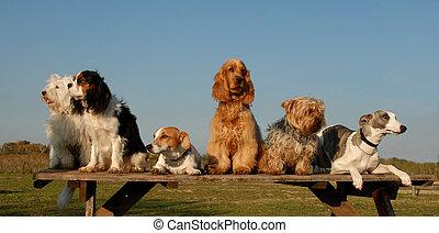 weinig; niet zo(veel), honden