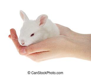 weinig; niet zo(veel), konijnen, in, de, handen