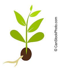 weinig; niet zo(veel), plant, groeiende, van, zaad, -,...