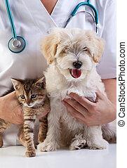 weinig; niet zo(veel), veeartsenijkundig, dog, kat