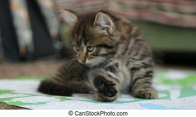 weinig; niet zo(veel), vloer, katje