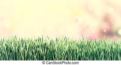 weinlese, natur, hintergrund, mit, gras