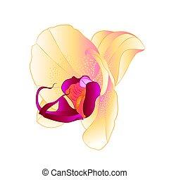 weinlese, phalaenopsis, orchidee, gelber , vector.eps
